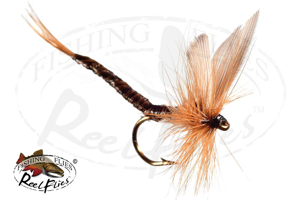 Ginger Quill Extended Body Dry Fly