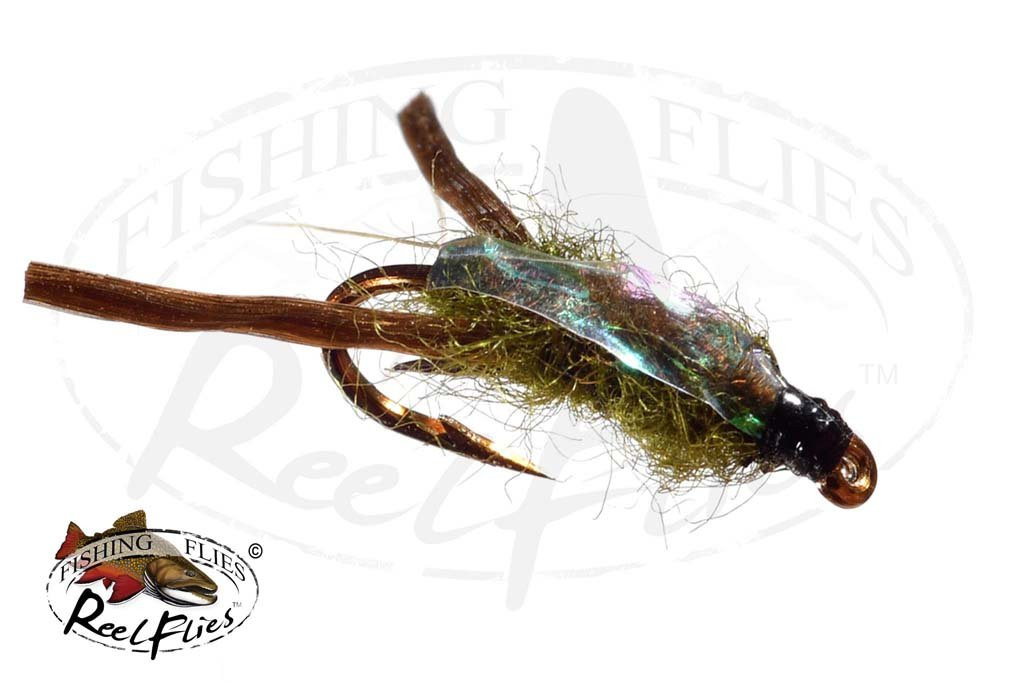 Water Boatman Olive