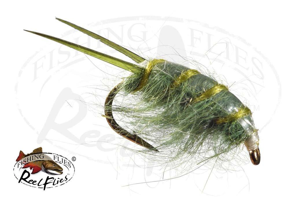 Sowbug Olive
