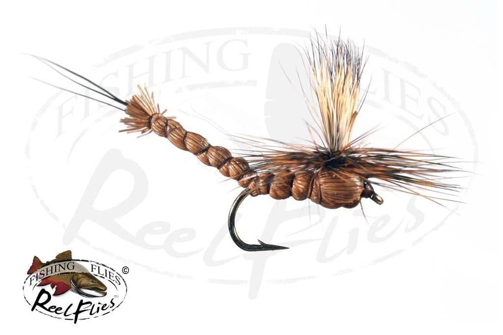 Brown Parachute Drake