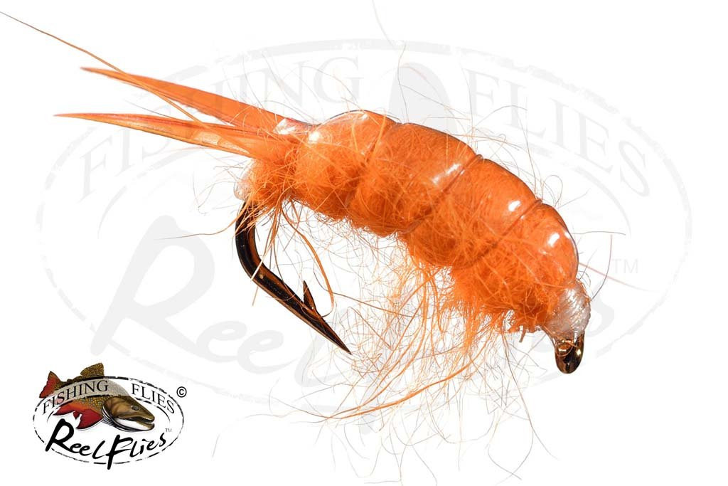Sowbug Orange Scud
