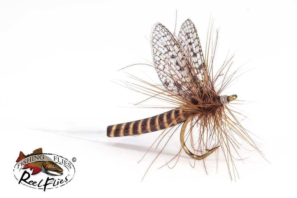 Realistic Red Quill Mayfly