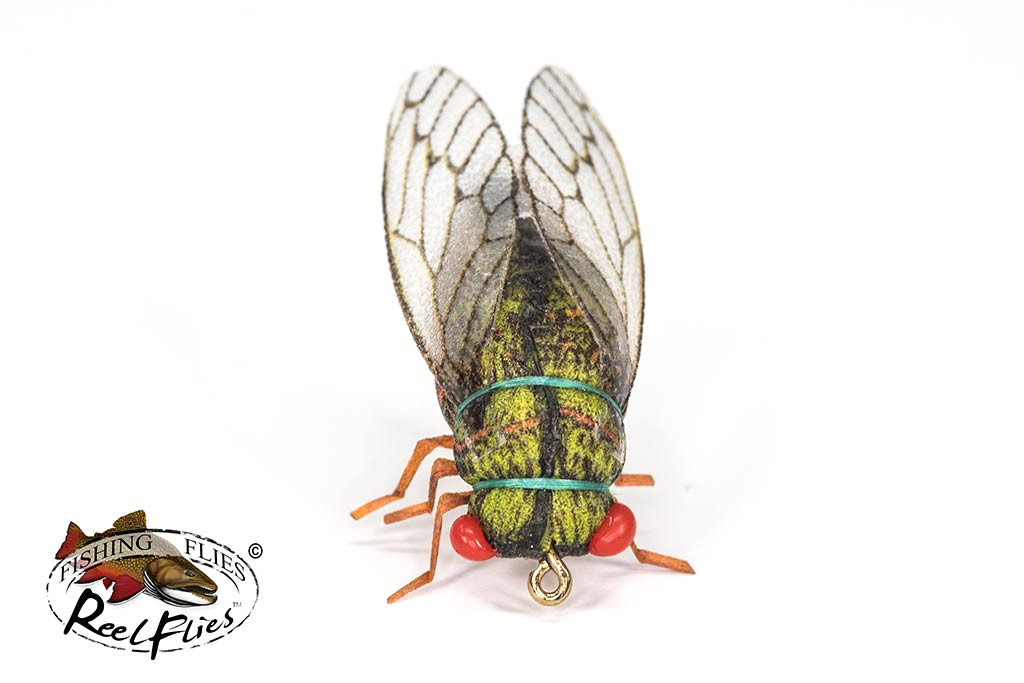 Realistic Olive Cicada Fly