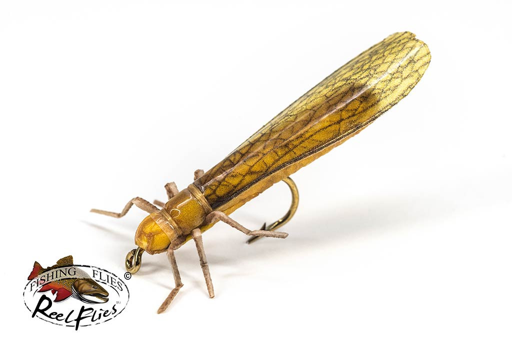 Realistic Golden Stonefly Dry Fly