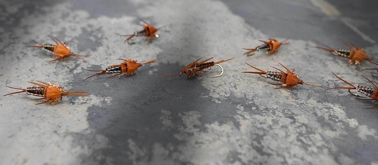 Stonefly Nymphs
