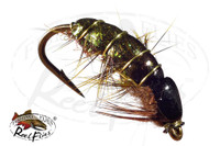 Olive Rocky Mountain Pupa