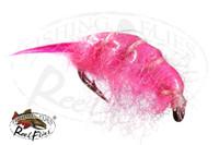 Sowbug Pink Scud
