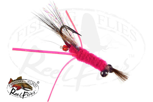Candy Shrimp Pink