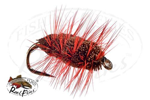 Brown Orange Buck Bug