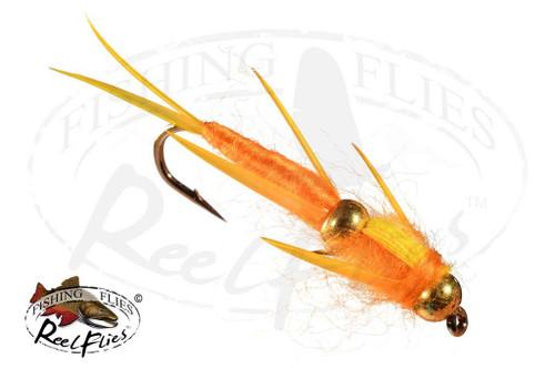 DBH-Golden-Biot-Stonefly