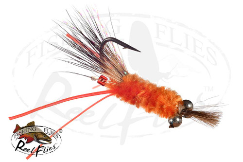 Candy Shrimp Orange
