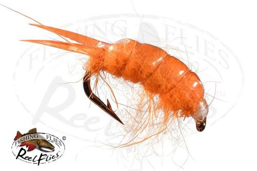 Sowbug Orange Scud
