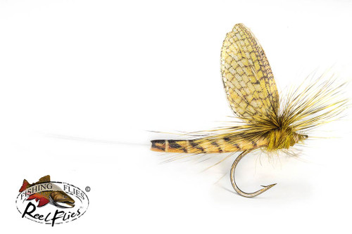 Realistic Hexagenia Mayfly