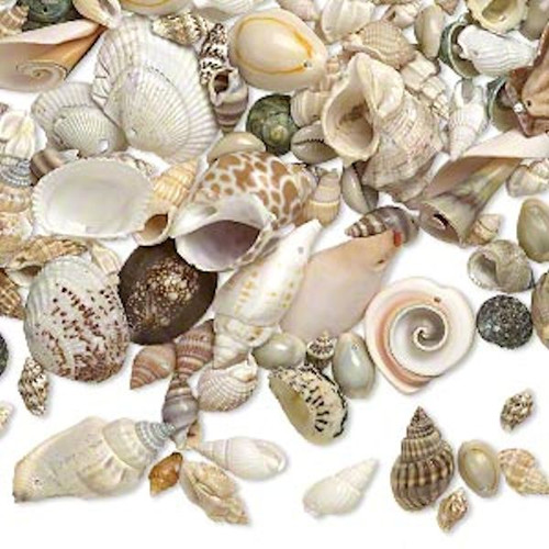 1/2 Pound Natural Seashell 13x8-48x36mm Random Mix of 170-210 Drops
