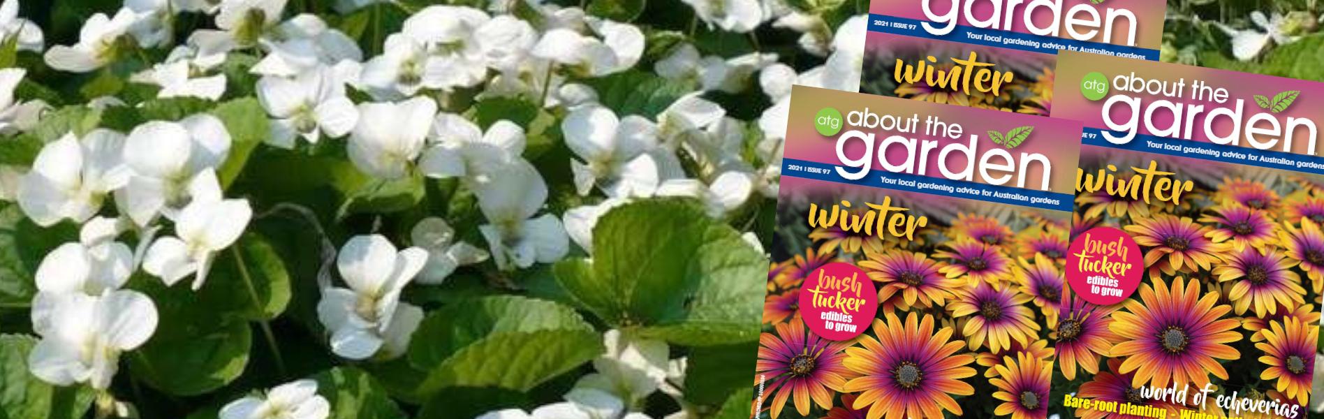Winter Garden Guide