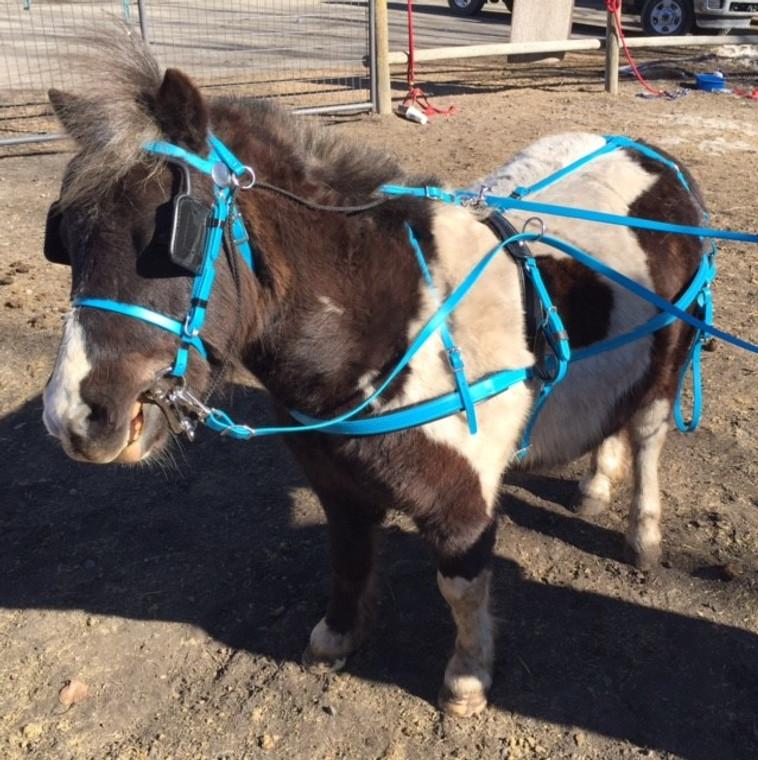 Countryside Marafun Colour Harness Mini and Pony