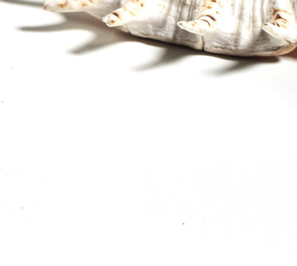 Vanity Stone Bench Top - Super White 900 x 460