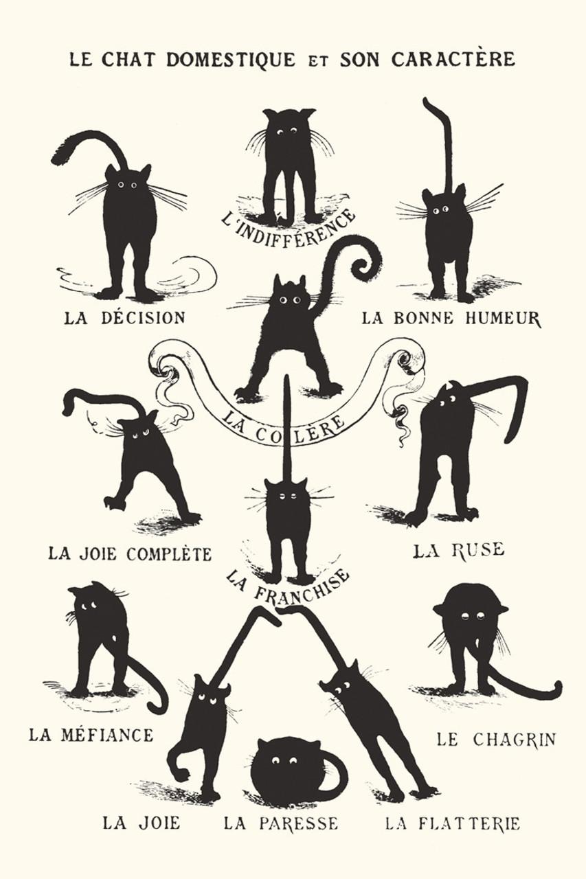 Le Chat Domestique Poster-Laminated available -90cm x 60cm