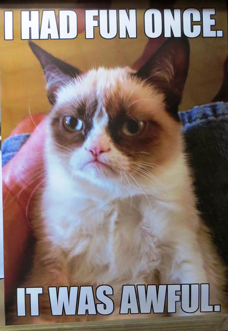 Grumpy Cat-I Had Fun Once- Poster-Laminated available-90cm x 60cm-Brand New