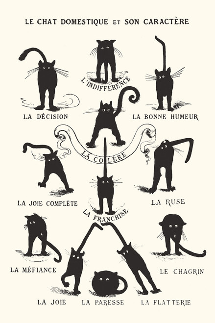 Le Chat Domestique Poster-Laminated available -90cm x 60cm