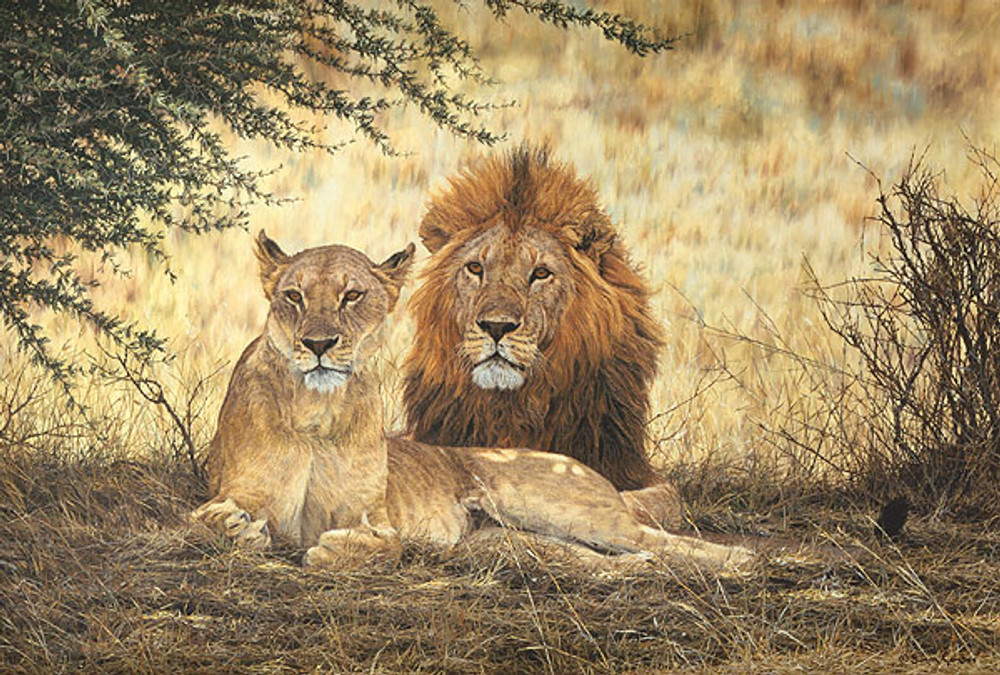 Midday Siesta, by Simon Combes LIMITED EDITION CANVAS