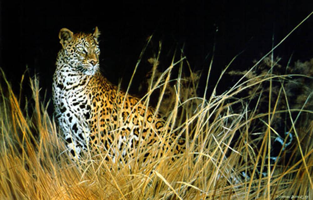 Leopard Hunts Alone
