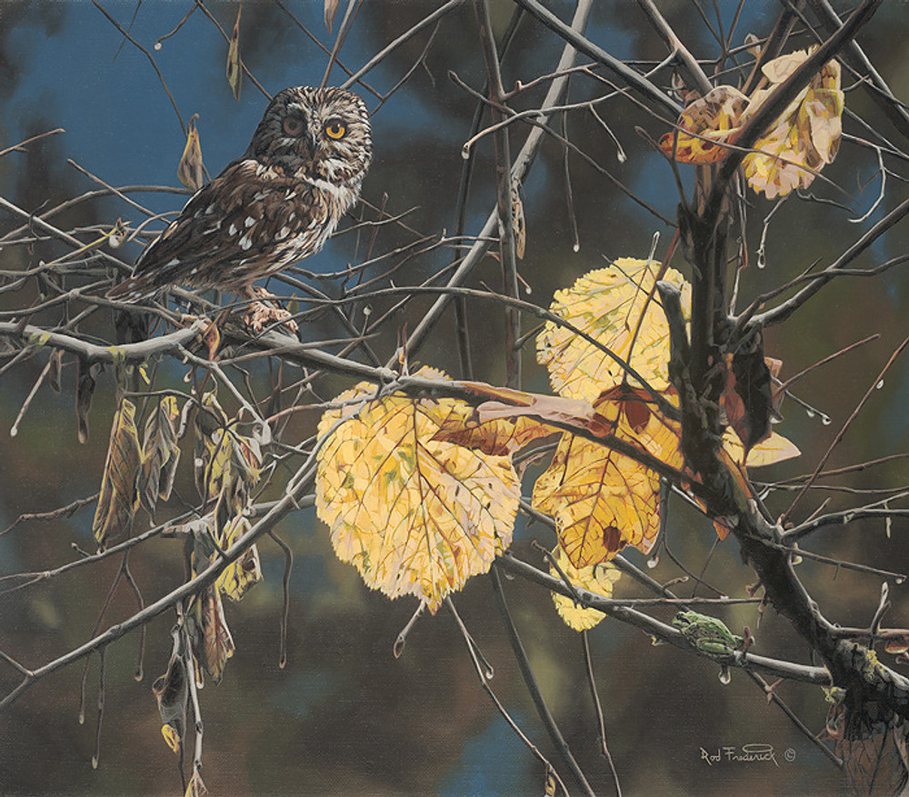 Owl Painting by Rod Frederick