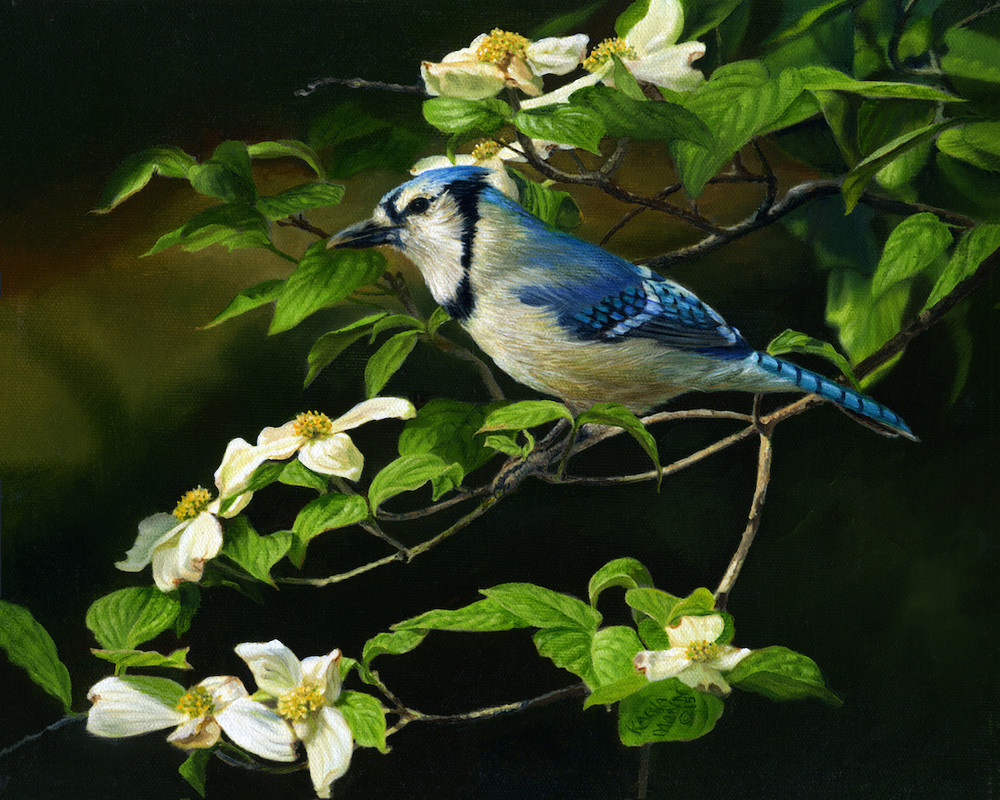 Bluejay painting