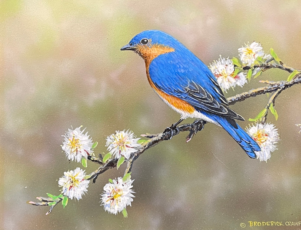 Blue Bird by Broderick Crawford