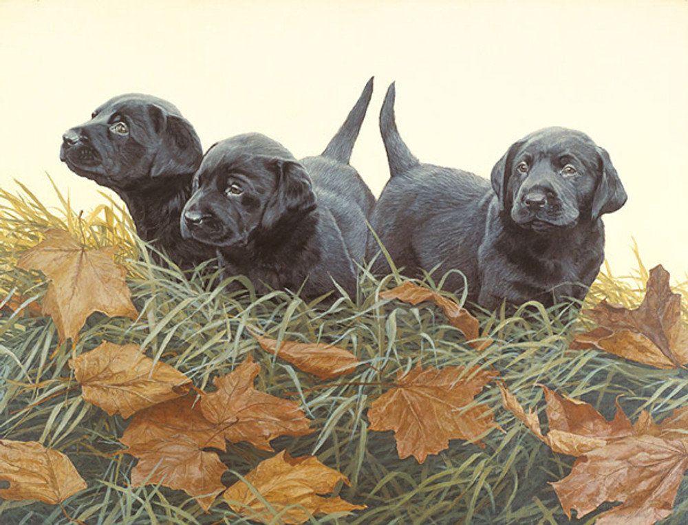 Lab Puppies, John Weiss ANNIVERSARY EDITION CANVAS