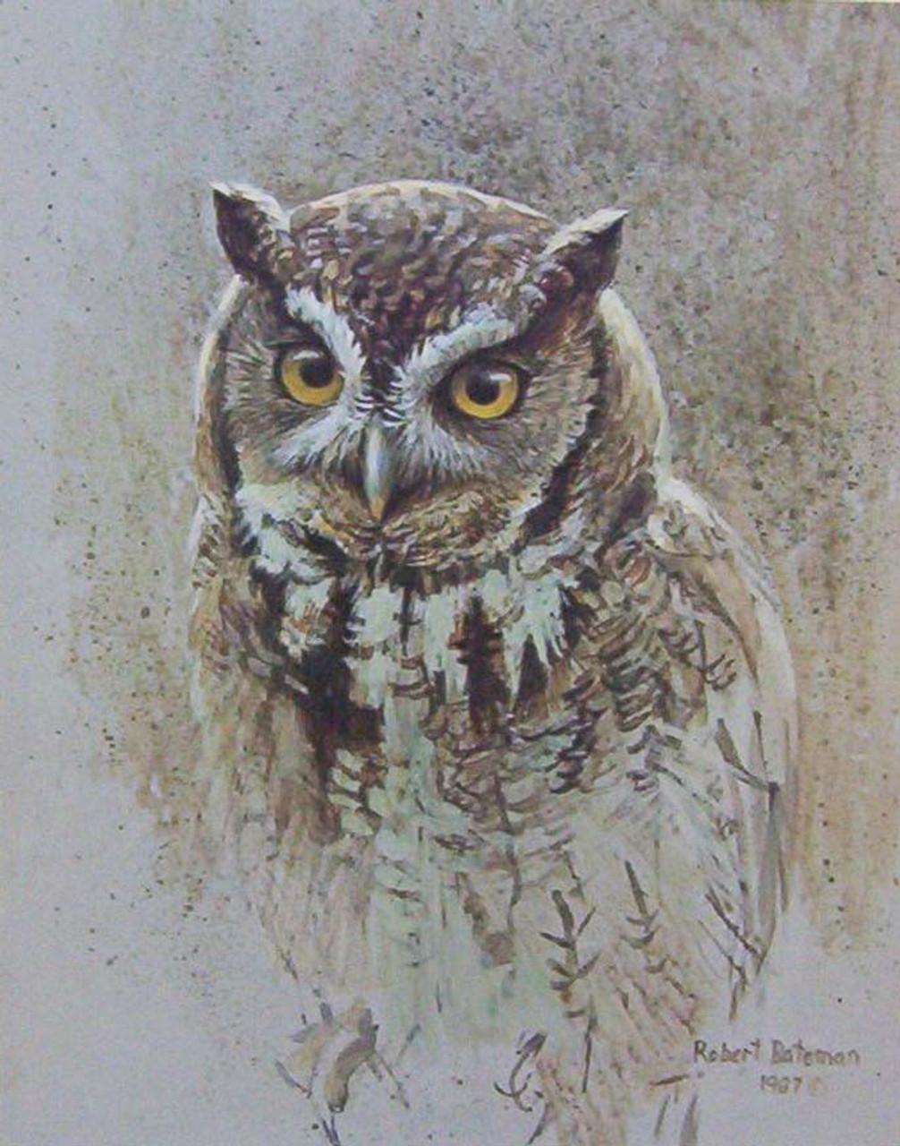 Screech Owl Study by Robert Bateman