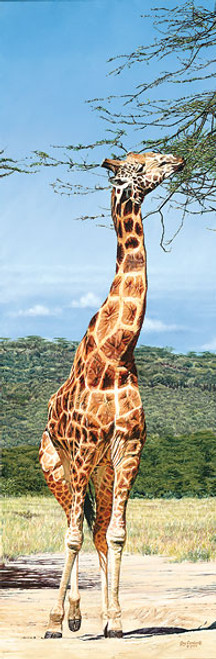 Rothschild Giraffe, Nakuru Park, by Guy Combes MASTERWORK EDITION CANVAS