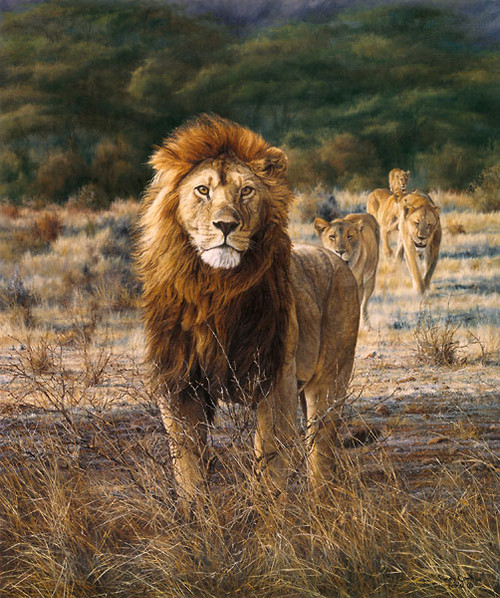 In His Prime, by Simon Combes LIMITED EDITION CANVAS