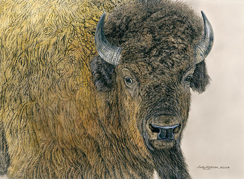 Slow Bull, JUDY LARSON LIMITED EDITION CANVAS