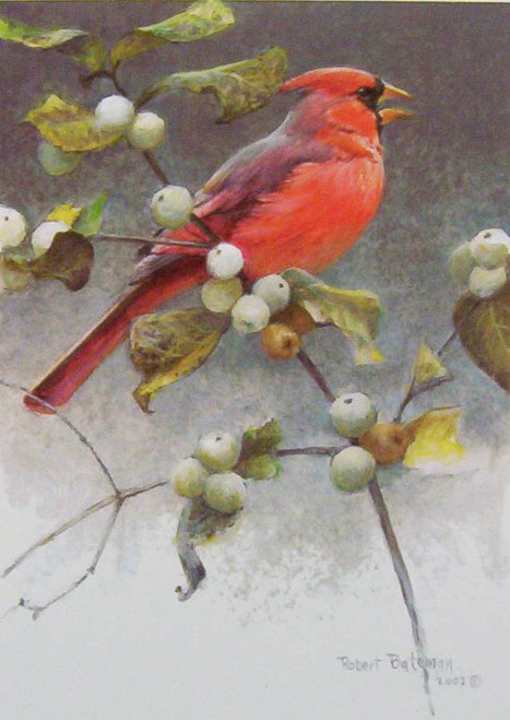 Cardinal and Snow Berries by Robert Bateman