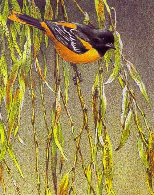 Baltimore Oriole SONGBIRD TRIO by Robert Bateman