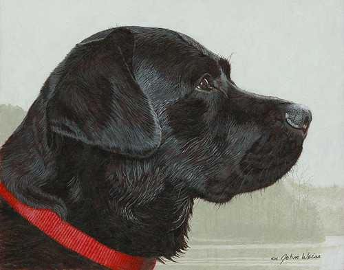 The Fogs Risin' - Black Lab by John Weiss