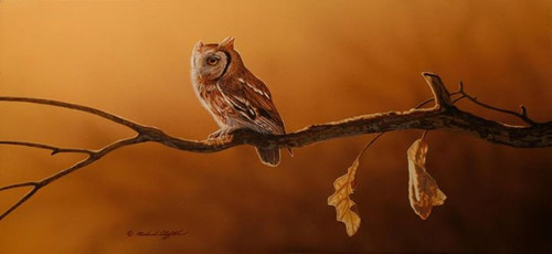 Screech Owl Original Painting