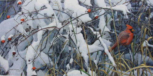 Fresh Snow Cardinal