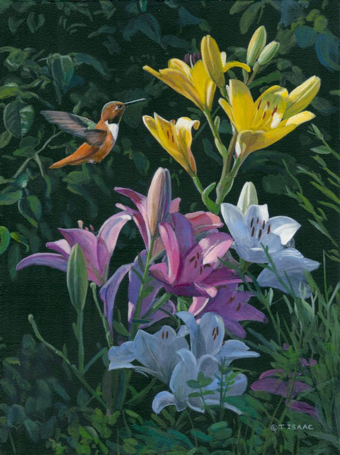 Rufous Hummingbird with Lilies by Terry Isaac