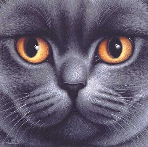 BRITISH BLUE SHORTHAIR by Braldt Bralds framed print