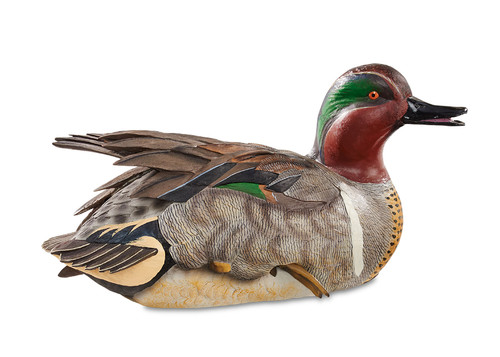 Green–winged Teal