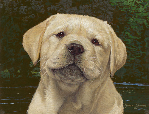 Smiley - Golden Retriever by John Weiss - Canvas Limited Edition