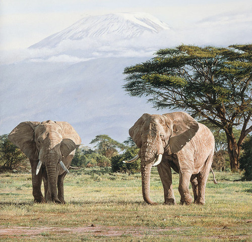 African Ancients - Elephants