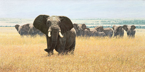 Confrontation - elephant - Simon Combes
