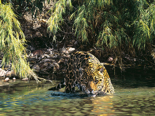 Eyes of Warning - Jaguar Simon Combes