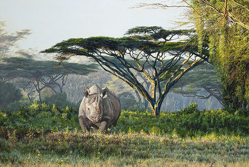 painting of rhinoceros
