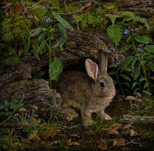 Rabbit painting by Karla Mann