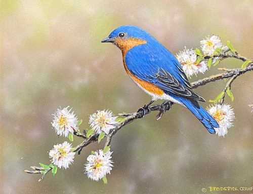 Blue Bird by Broderick Crawford