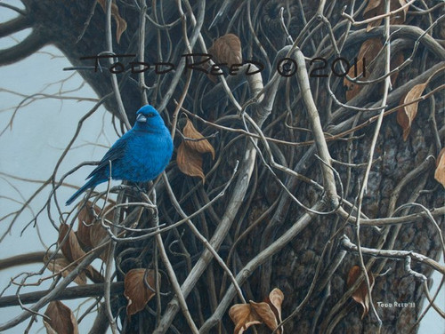 Indigo Bunting by Todd Reed - Acrylic Painting
